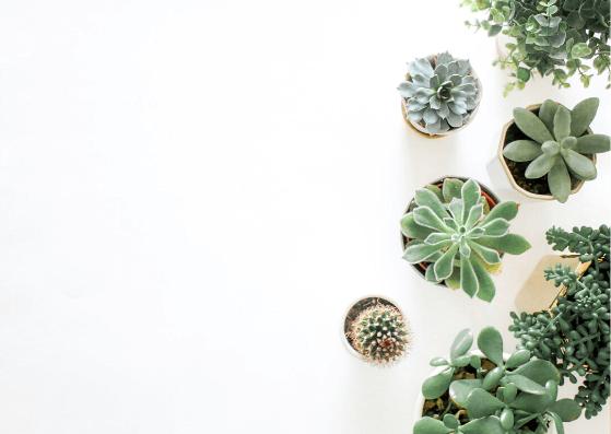 Plants-Art-Flatlay-Ideas-Pune-Prop-Store
